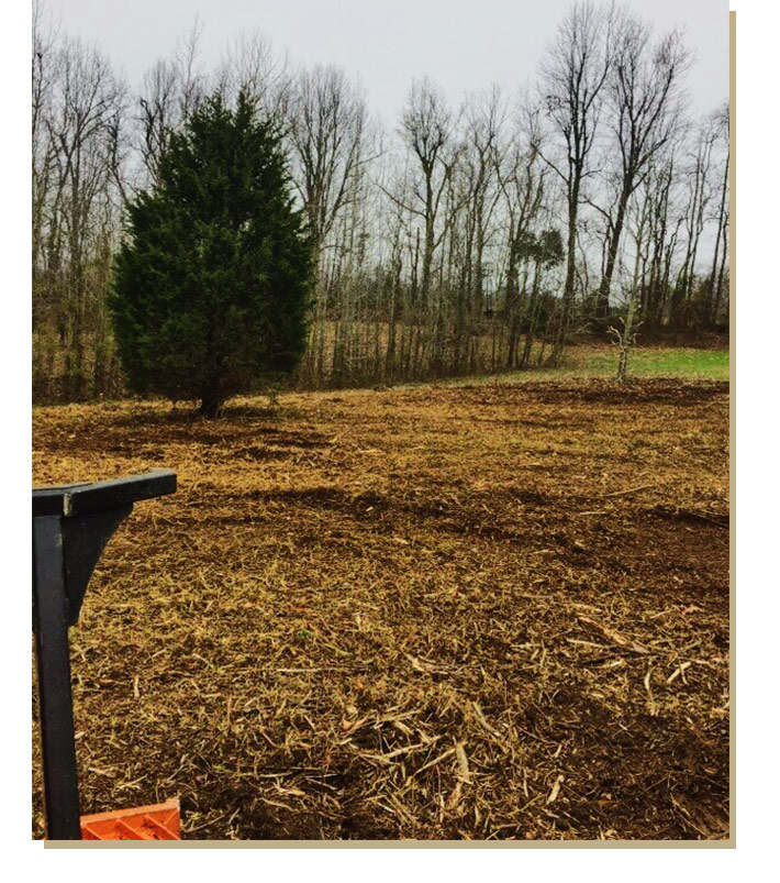 Trees and brush after land clearing service