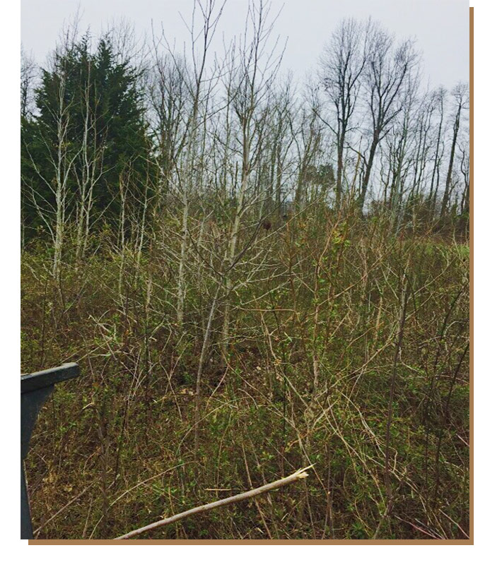 Trees and brush before land clearing service